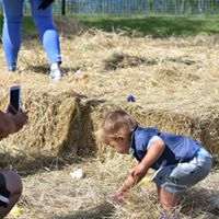 child finding hidden Easter eggs